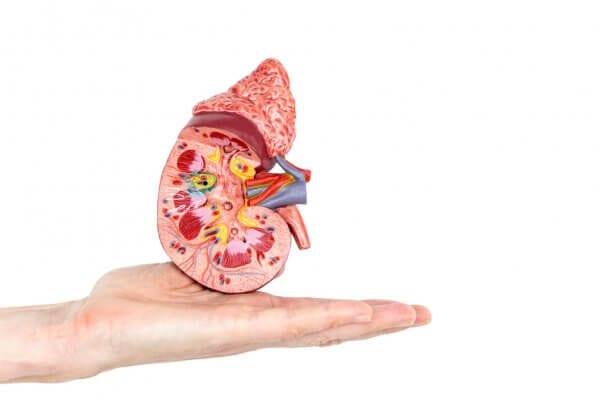 Ureteroskopija bubrežni kamenci